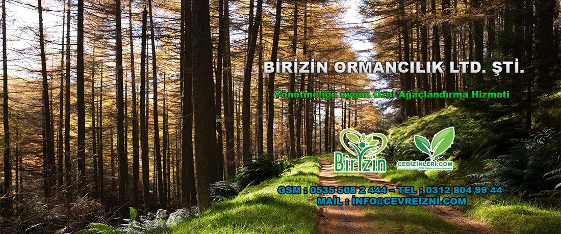 Özel Ağaçlandırma Yönetmeliği ve Özel Ağaçlandırma hakkında detaylı bilgi bu sayfada. Özel Ağaçlandırma Hizmeti Birizin Ormancılık LTD. ŞTİ.